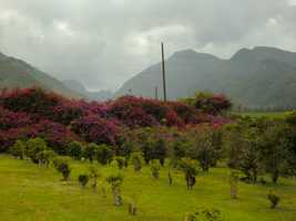 The beautiful mountains in the background will be the next stop for the group as they head to Iao Valley State Park.