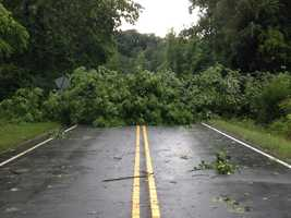 WXII photographer and reporter images of Thursday's storm damage. This is a tree down in Tobaccoville. (Thanks, Phil Kivett.)