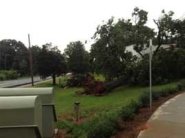 Another tree down (thanks, Veronica White)