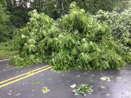 Damage in Tobaccoville (thanks, Phil Kivett)