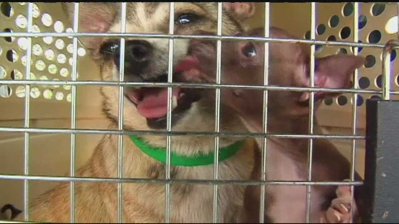 More than 80 animals have been seized from a home in the Eastern part of NC
