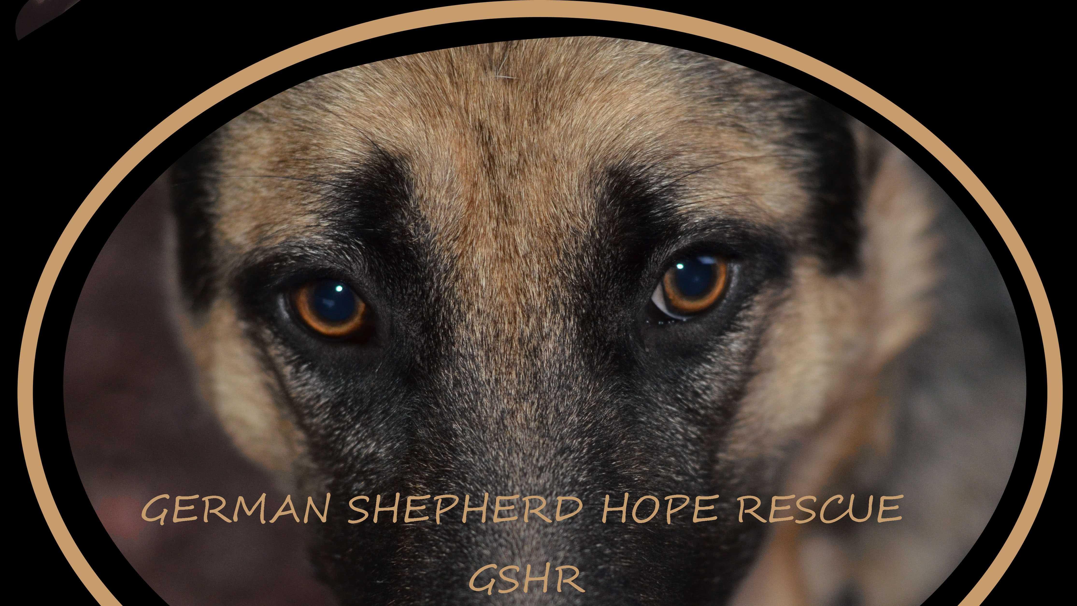 German Shepherd Hope Rescue