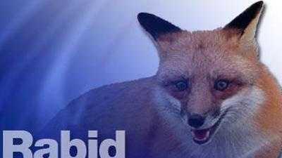 Rabid Fox - 26690055