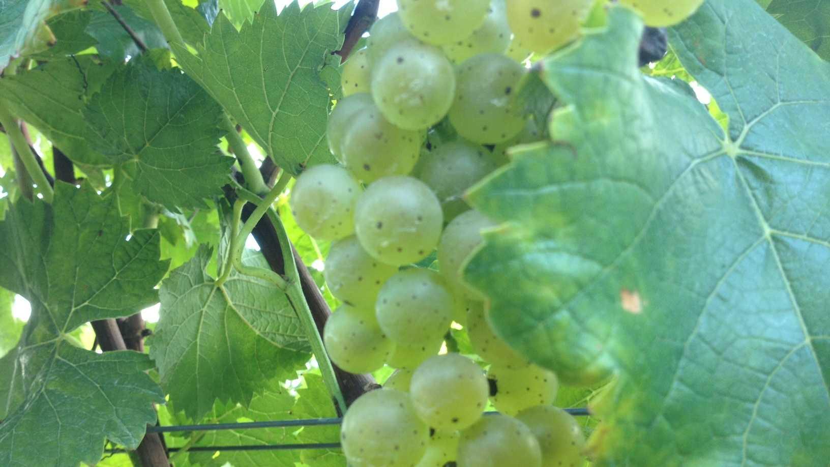 Winery 14