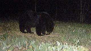bear-1.jpg best