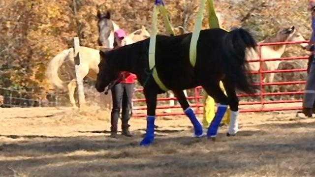 horse rescue 7.jpg