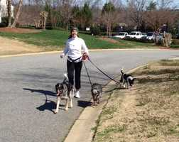 Hope, Blue and Macho taking their owner for a run.
