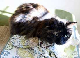 Ellie and Emma live with Oscar. She comes from a long line of female cats with male names.  Oscar is 17 years old!