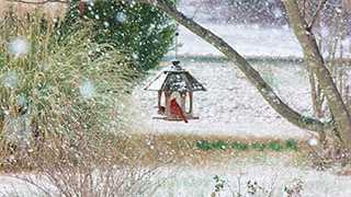 Snow scene - bird