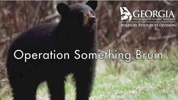 bear poaching
