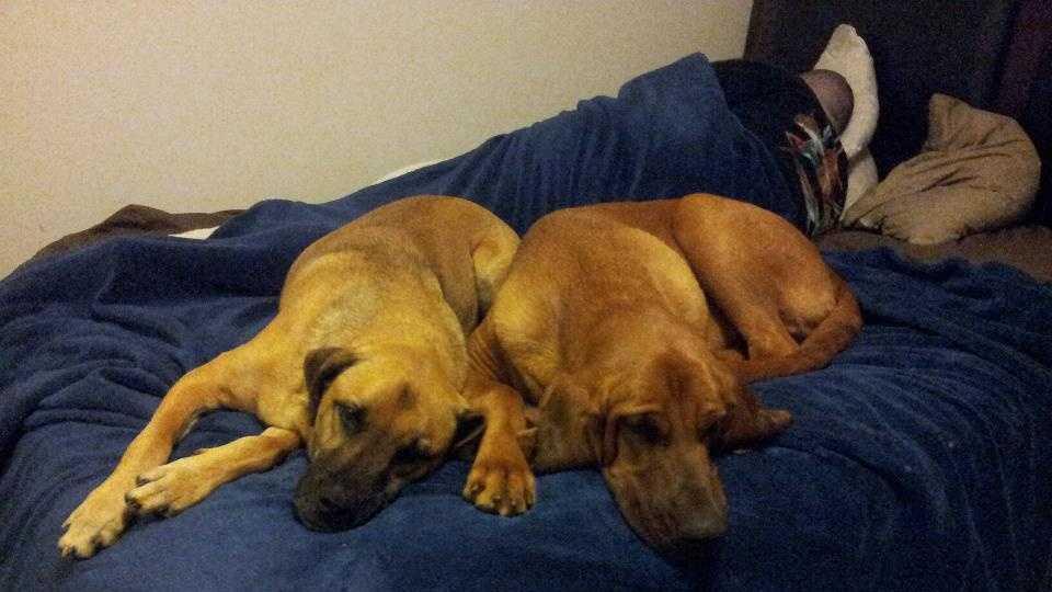 Waylon and Puppy