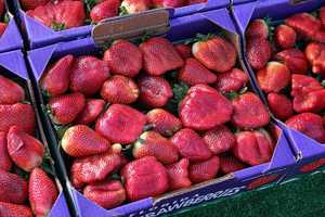North Carolina is the fourth largest producer of strawberries in U.S.