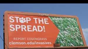 clemson billboard