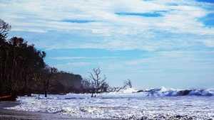 Hunting Island Charleston's The Digitel