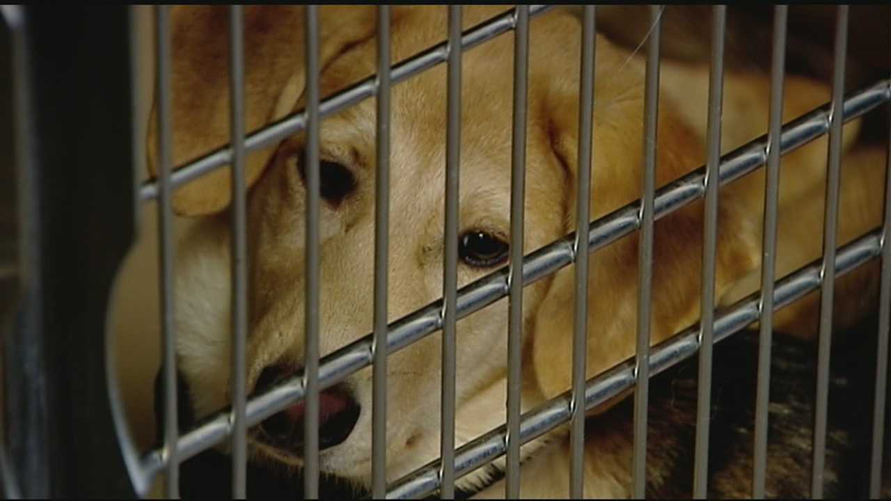 Dozens of dogs adopted as shelter reopens