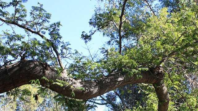 tree limb generic