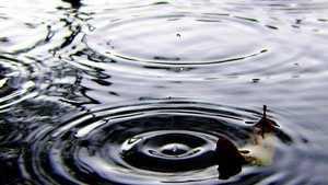 rain-puddle-Patrick-Feller.jpg