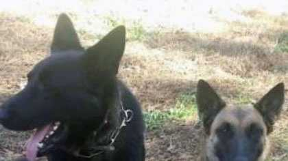 Missing K9 - Newberry County