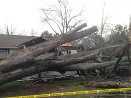 A large tree fell on 2 homes on South Prevost Street in Anderson and it is believed that high winds are to blame.