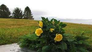 grave site cemetery death generic