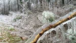 ice on tree limb (GOOD)
