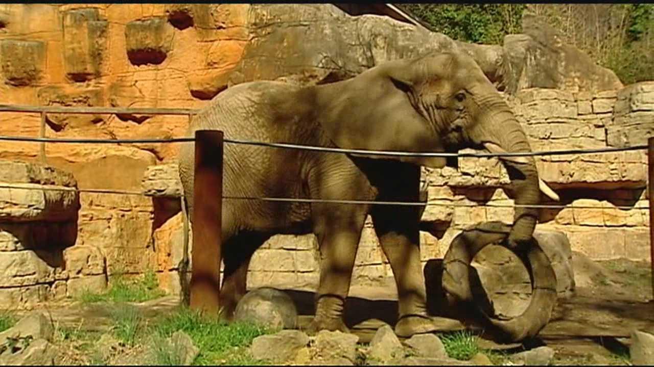 Joy, the Greenville Zoo's last elephant, will be leaving soon
