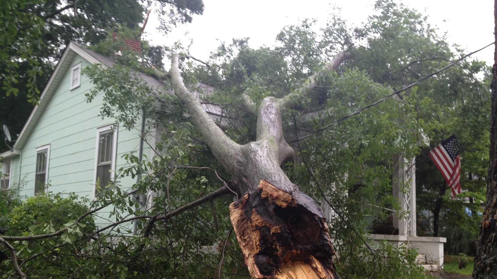 tree on house Woodrow Street