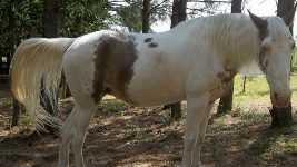 Sadie, Missing Horse