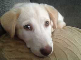 ... and Ella, a dog adopted from the Greenville Humane Society.