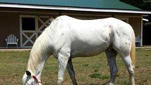 stolen-horse-sassy-stable.jpg