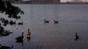 Lake Julian
