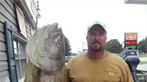 big striper bass