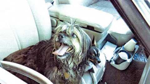 dogs left in car
