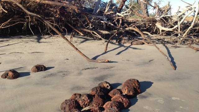 Richard Beck cannonballs on Folly Beach.jpg