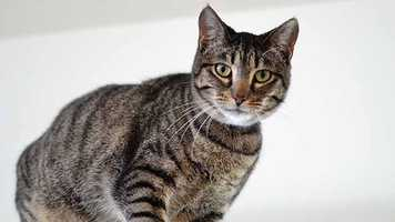 Tish (A0257554) – 2 year old female Domestic ShorthairLearn all about me by clicking on my link! http://www.petharbor.com/pet.asp?uaid=PBHS.A0257554 If you are interested in adopting me, please come visit me at Peggy Adams Animal Rescue League or call their Adoption Department at 561-686-6656. View my other kitty friends available for adoption at http://www.peggyadams.org/index.cfm?fuseaction=pages.adoptable-cats.