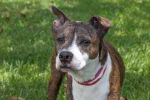 Willow (A0291191) – 12 year old 33 lb. female mixed breedLearn all about me by clicking on my link! If you are interested in adopting me, please come visit me at Peggy Adams Animal Rescue League or call their Adoption Department at 561-686-6656. View my other doggy friends available for adoption HERE.