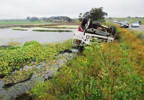 A truck hauling a large load of broccoli tipped into Elkhorn Slough near Moss Landing because the car in front of the truck slammed on its brakes to avoid hitting ducks crossing the road, the CHP said.