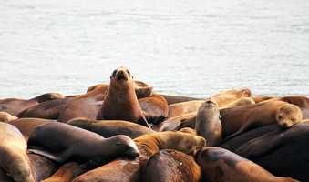 These sea lions were hanging out in Moss Landing.
