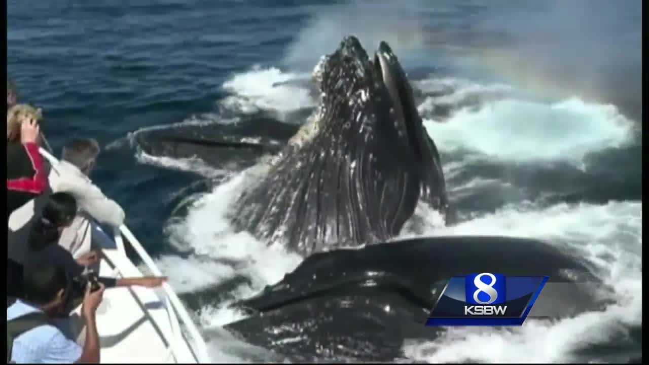 Lots to Learn at Whale Fest in Monterey