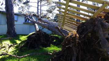 Trees toppled onto a house in Pacific Grove during a wind storm on Jan. 31, 2016.