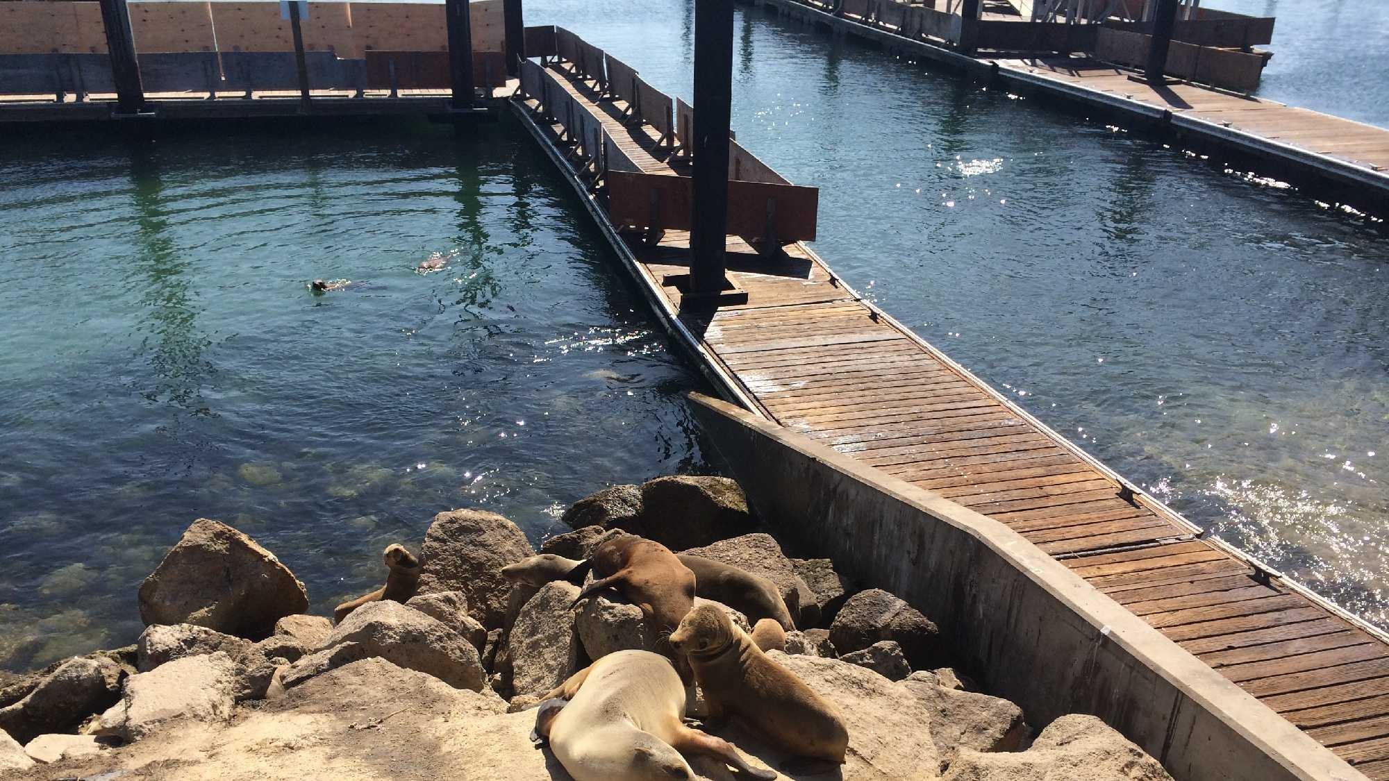 Sea lions at BWBL.JPG