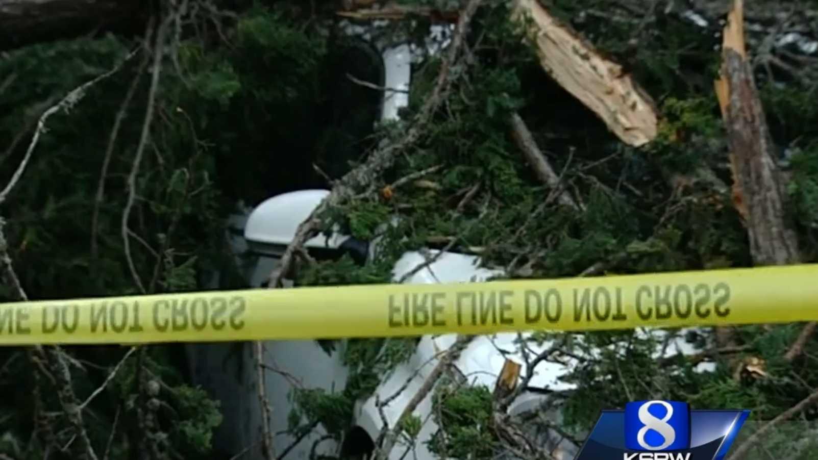 KSBW toppled tree.jpg