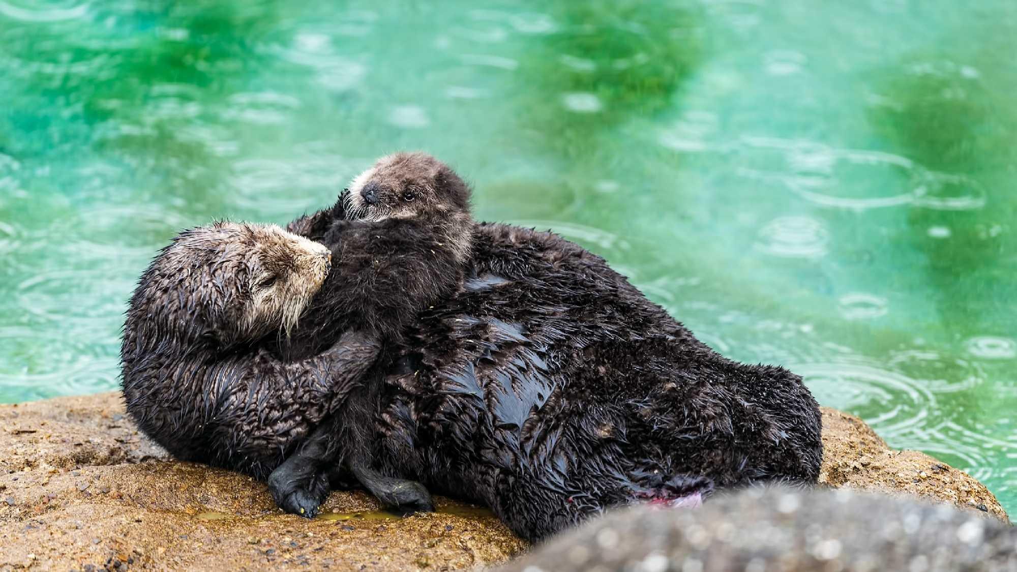Newborn pup in Monterey (March 5, 2016)