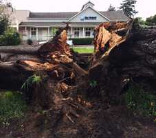 A giant Monterey cypress tree fell on two cars in Aptos during a storm on March 11. No one was injured.