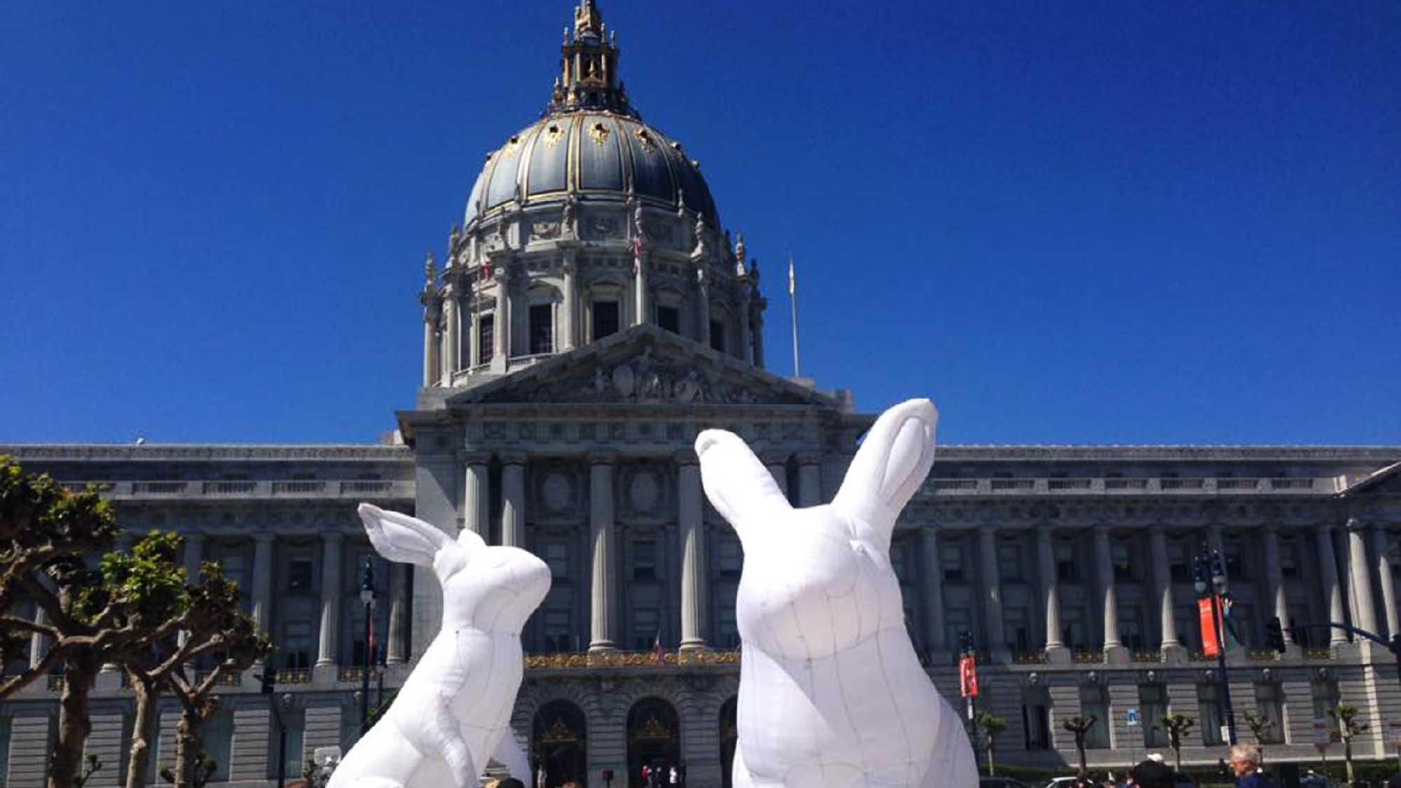 Bunnies in San Francisco