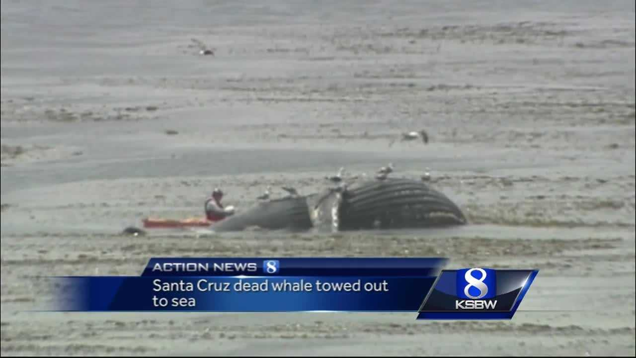 Dead whale towed