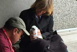 """""""The birds are healthy and are being well cared for by the parents,"""" Stewart said."""