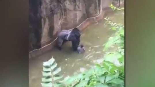 The boy climbed through a barrier and fell 15 feet into a shallow moat at the Gorilla World exhibit at the Cincinnati Zoo.