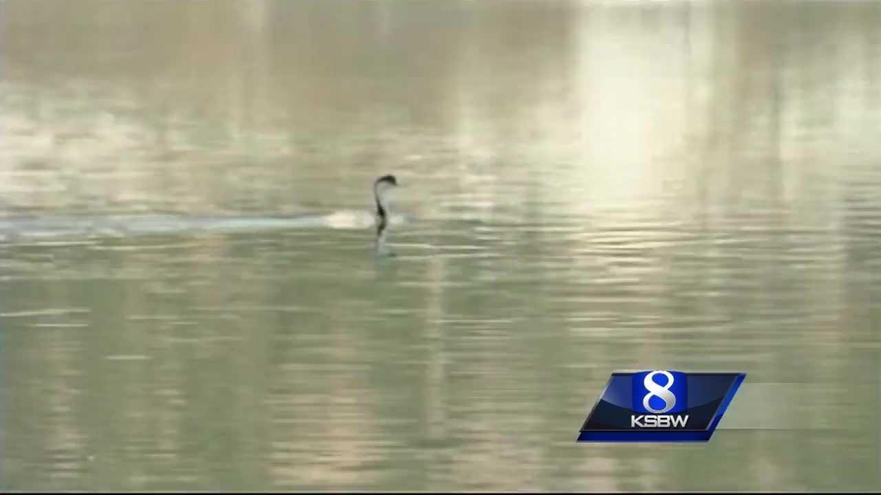 Saving Lake San Antonio