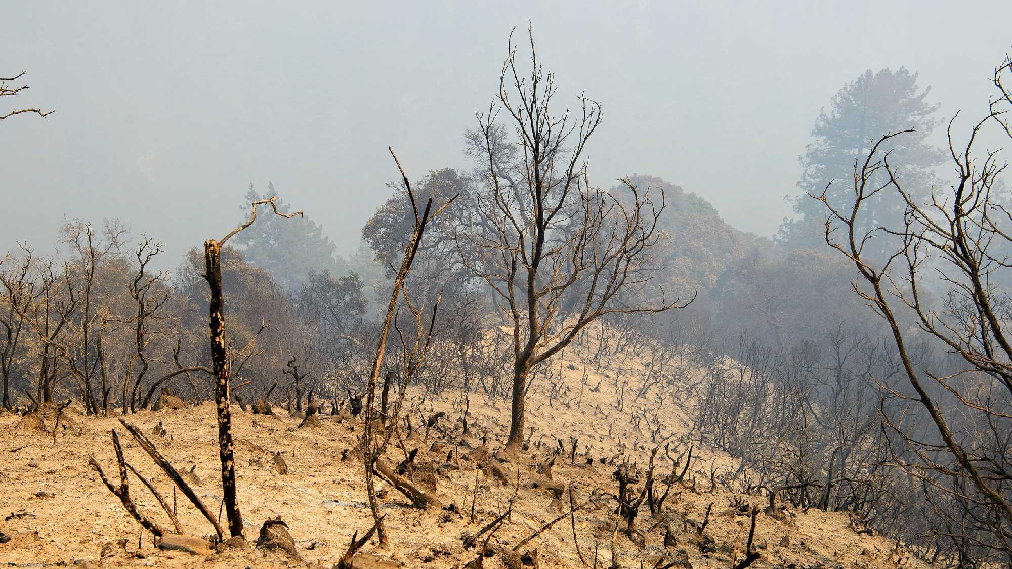 Land burned by Soberanes Fire